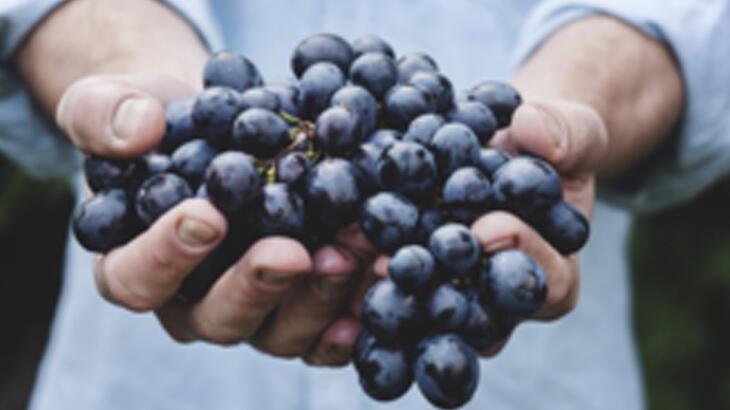 O vinho é uma das bebidas mais populares de todo o mundo!